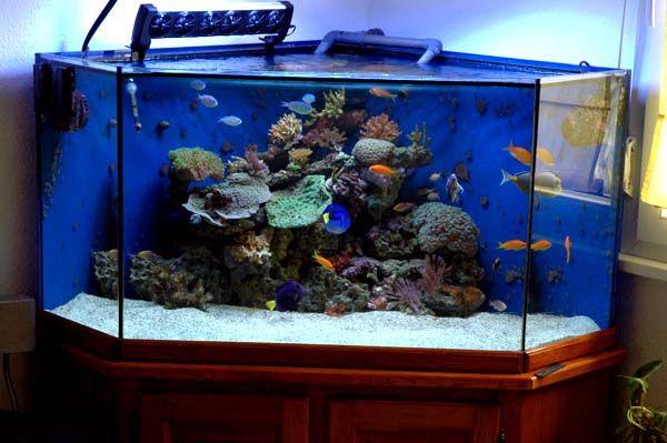 Aquarium eau de mer 50 litres for Aquarium angle