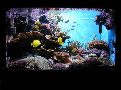 aquarium 450 l eau de mer