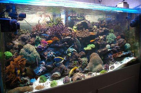 r cif france l 39 aquariophilie marine et r cifale la port e de tous. Black Bedroom Furniture Sets. Home Design Ideas
