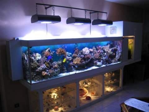 Aquarium eau de mer 1000 litres for Aquarium prix