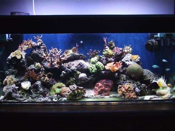 Nano aquarium eau de mer 100l for Achat aquarium eau de mer