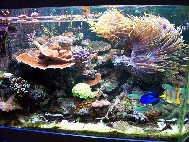 R cif france aquariophilie eau de mer aquarium r cifal for Site aquariophilie