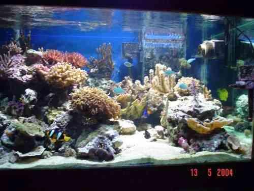 aquarium eau de mer bruxelles