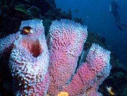Different types of Sponges. - All About Sponges JFR